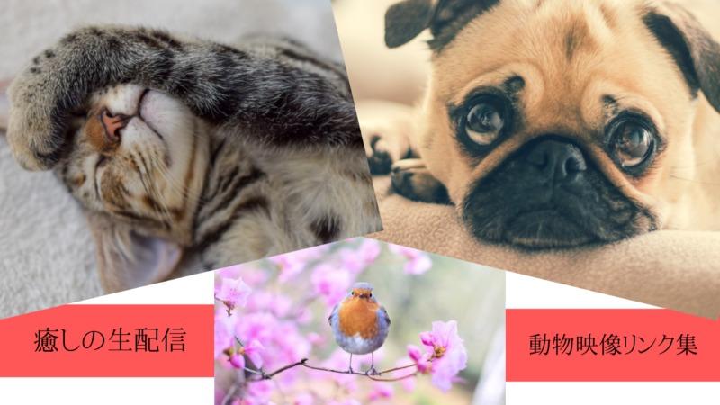 色々な動物のライブカメラ映像(YouTube)のリンク集です。