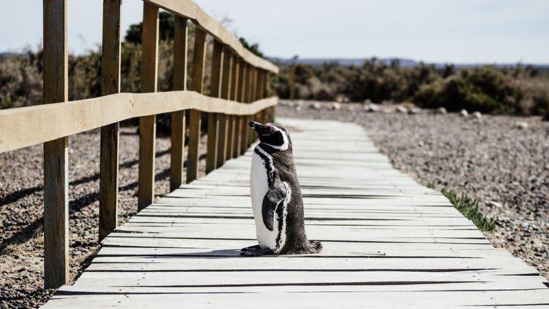 癒しのライブカメラ第2弾は、カンザスシティにある動物園のペンギンの映像です。よちよち歩きやツルツル滑りながら歩く姿が堪りません。